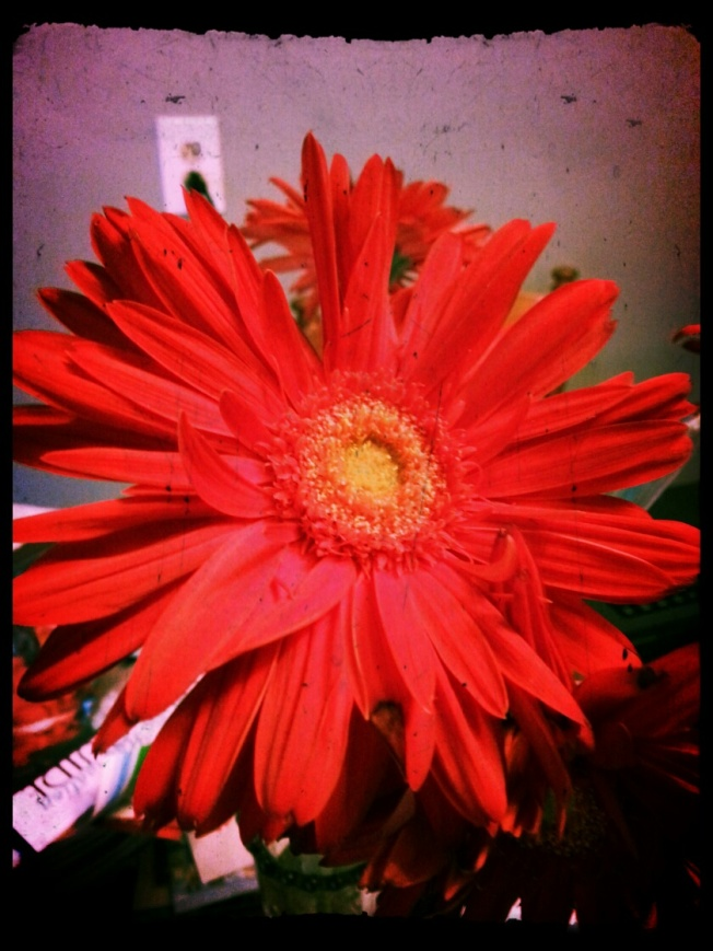 { last weeks red flower}