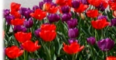 {Welcome Spring on March 20, 2013}